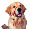 Treino para Cães